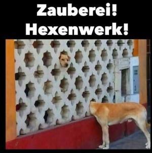 Neugierige Hunde