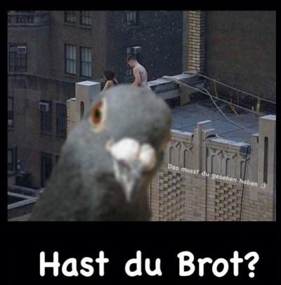 Tauben im Rampenlicht